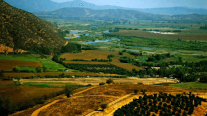 Vinuri chiliene din Maipo Valley